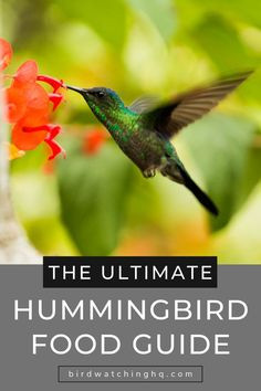 Learn the simple hummingbird nectar recipe you should be using today! Make delicious hummingbird food in under 5 minutes w/ two ingredients. Includes 8 FAQ. #hummingbirds #nectar