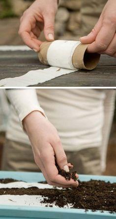 L'utilisation de papier hygiénique comme Rubans de Semences bricolage