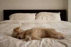 sleeeeeeeeeppppyyyyyyy by Desmond Leo, via Flickr