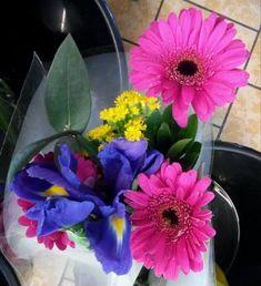 gerbery s irisem pieces) Lidl, Jigsaw Puzzles, Bouquet, Plants, Bouquet Of Flowers, Bouquets, Puzzle Games, Plant, Floral Arrangements