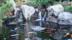 Fish Ponds Filters Design ~ http://lovelybuilding.com/fish-ponds-filters-for-gardening-ideas/