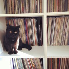 Time spent with cats or records is never wasted. #vinyl #nowplaying #nowspinning #cat