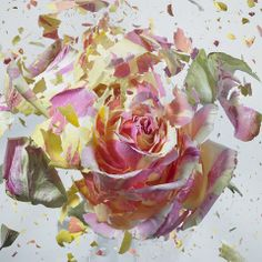 """Rapid Bloom"" a photo series by Photographer Martin Klimas, studying the ""architecture of the blossoms"" as they shatter after being frozen in liquid nitrogen. (Click through for slide-show) Martin Klimas, High Speed Photography, Abstract Photography, Amazing Photography, Movement Photography, Photography Series, Photography Flowers, Creative Photography, Photography Ideas"