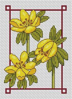 January free chart winter aconite | Amanda Gregory cross-stitch design