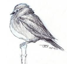 Image result for bird sketches