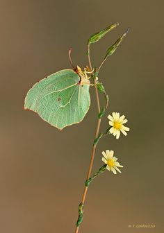 ✿⊱what do you see? You may see a simple branch with flowers and a leaf ...or you may see a beautiful part of nature . A butterfly. Look closely.
