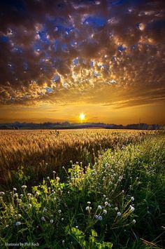 Summer Sunset at Flower Field ~ Marvelous Nature