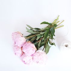 peonies | oh so pretty instagram