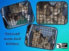 August 28, 2014:  Mother and Kittens Rescued