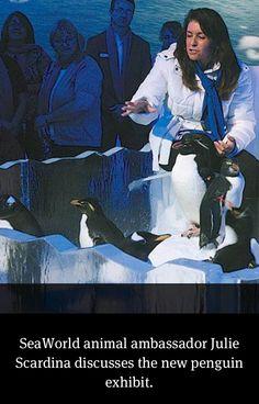 Penguins at Sea World Orlando