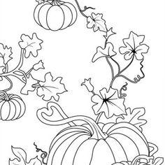 pumpkins pumpkins and scarecrow pumpkins coloring page