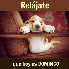 Relájate que hoy es #Domingo... #Citas #Frases @Candidman
