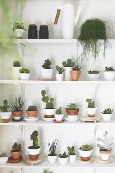 Best indoor plants Plant decor Plants Indoor cactus Indoor plants Trendy plants How to Grow More Succulents Without Spending a Dime Decoration Cactus, Decoration Plante, Best Indoor Plants, Indoor Garden, Indoor Herbs, Outdoor Plants, Plant Wall, Plant Decor, Cactus Flower