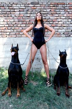 The Gate Keepers! Doberman Pinscher Dog, Doberman Dogs, Dobermans, Big Dogs, Cute Dogs, Scary Dogs, Pet Camera, Retro Lingerie, Dog Breeds