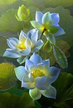 Beautifully Grown Lotus - Nelia Rafallo - Google+
