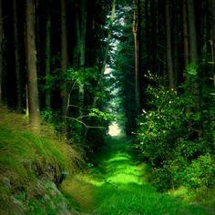 Green Path, The Enchanted Wood photo via samantha