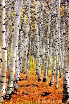 This is one of my favorite images that I've ever taken.  Autumn 2006 on the Alpine Loop near Sundance, Utah.