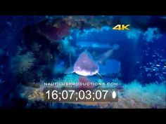 Nautilus Posts New 4K Stock Footage! Nautilus Productions has uploaded over a dozen new 4K UHD underwater video clips for license. The new hours of stock footage include whale sharks, turtles, sea lions, octopus, angelfish, skates, lobster, lionfish and more. Locations include the Atlantic, Caribbean & Sea of Cortez. Watch the Clips!