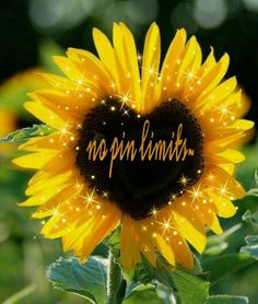 I love sunflowers and sharing pins. Come visit me anytime.