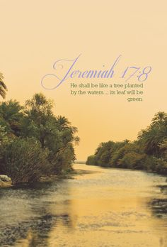 """This is the picture Jeremiah paints when he says that those who trust in the Lord are """"like a tree planted by the waters, which spreads out its roots by the river"""" (Jer. 17:8).  Visit us at facebook.com/immanuelnyc"""