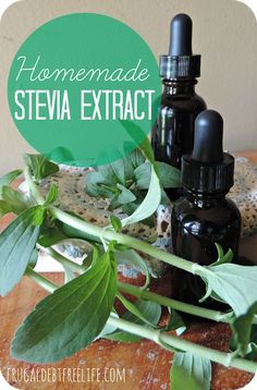 How to make your own Stevia extract. This was very simple it required some stevia leaves and some vodka.