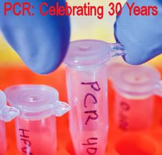 PCR: Celebrating 30 Years -  Highlights from a webinar held by The Scientist to celebrate 30 years of PCR: the technique's invention, quantitative real-time PCR, and digital PCR.