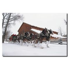 Title: Clydesdales - Snowing in Front of Barn Product Type: Gallery-wrapped canvas art Style: Photography Format: Vertical Size: Medium Subject: Landscapes Image dimensions: 16 inches high x 24 inches