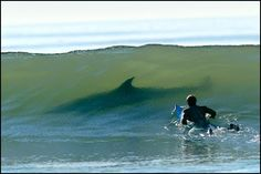 That moment when you realize you're about to have a really bad day    Looking for surfing gear I ran across this image from Kurt Jones. Captured in 2003, to this day there's still debate on what kind of fish this was. All I can say is if it was me on the board, it would be the kind of fish that would teach me how to run on water...