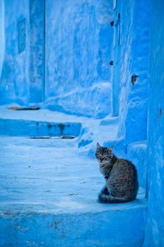 Chefchaouen, Morocco by Zanthia, via Flickr. Just yesterday I was in this blue city.