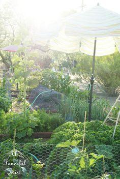 vegetable garden 23