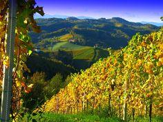 Die Südsteirische Weinstraße