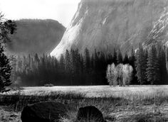 Cook's Meadow - Wista 45DX - Ilford FP4
