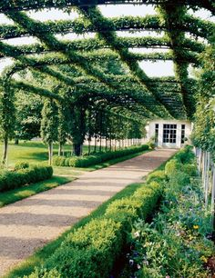 At Oak Spring, 'Mary Potter' crab apples are cordoned over a pergola that leads from the walled garden to the greenhouses (doors shown).