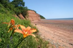Our day together we experience part of the Annapolis Valley region, where we will explore the coast of the world famous Bay of Fundy. Dartmouth Nova Scotia, Annapolis Valley, In The Beginning God, Adventure Tours, Small Towns, Beautiful Pictures, Landscapes, Coast, Country Roads