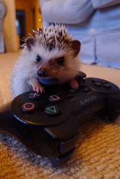 gamer hedgehog