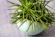 Ceramic Votive Candle Holder, Small Ceramic Planter, Contemporary Ceramics, Indoor Planters,  Cactus Ceramic Planter, Modern Pottery By ClaybyDannah