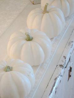 Sally's White Cottage Studio: ...sharing my love of white pumpkins...