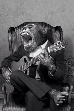 vintage pictures vintage everyday: 20 Funny Vintage Photos Show Animals Playing Musical Instruments as People Vintage Humor, Vintage Abbildungen, Funny Vintage Photos, Vintage Music, Funny Photos, Vintage Posters, Funny Animal Pictures, Funny Animals, Cute Animals