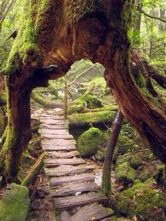 This is not a movie set, just an extremely cool wooden path in the Yukushima forest in Japan.
