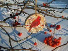 Свет в окошке: Яркий, новый зимний птиц. Красный Кардинал.