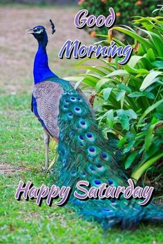 Good Morning Flowers Quotes, Good Morning Beautiful Quotes, Good Morning Picture, Good Morning Messages, Morning Pictures, Good Morning Images, Good Morning Happy Saturday, Sunday, Days Of Week