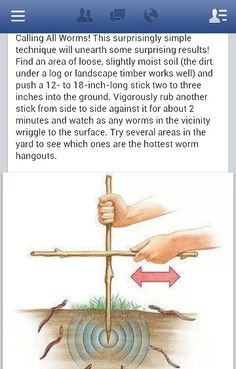 Need worms for fishing???