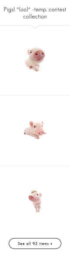 """Pigs! ^(oo)^ -temp. contest collection"" by sica1616 ❤ liked on Polyvore featuring animals, pigs, fillers, piggies, pink, pets, pig, backgrounds, accessories and farm"