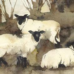 KO.17 winter sheep