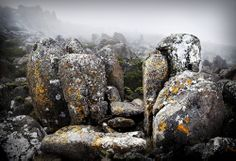 Mount Wellington, Tasmania, Australia The top of the mountain was fogged in, and very cold, but very calm and quiet. Landscape photography of kunanyi / Mount Wellington Landscape Photos, Landscape Photography, Photography Portfolio, Art Photography, Tasmania, East Coast, Photo Art, Australia, Fine Art