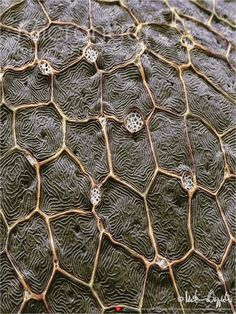 Zebrafish Skin ( Danio rerio ) Magnification: 1'750:1 .