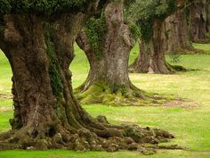 Beautiful trees ~ full of character