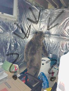 A bear in the basement. Basement, Real Estate, Bear, Root Cellar, Real Estates, Bears, Basements