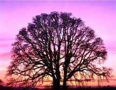 Oak tree exalted