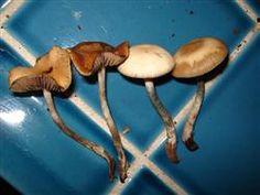 19 Best wild Michigan mushrooms images in 2018